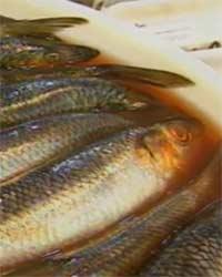 Жирные сорта рыбы, польза жирной рыбы