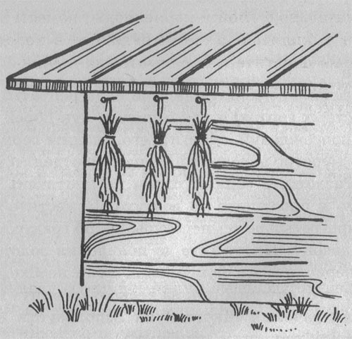 Как сушить укроп