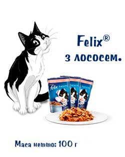 Что делать, если кот не ест корм