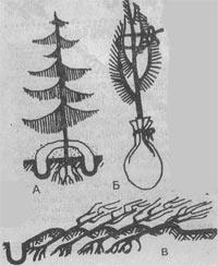 Как пересадить деревья