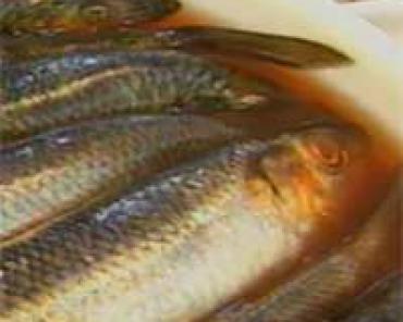 Жирные сорта рыбы, польза...